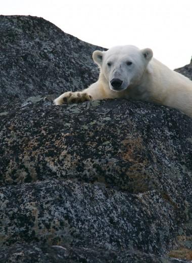 Чем России грозит глобальное потепление?