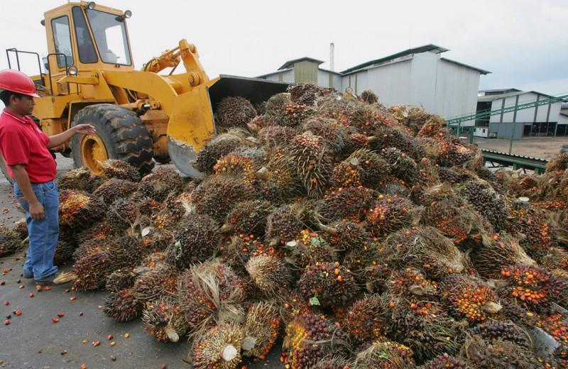 Производителей продуктов хотят спустить с пальмы