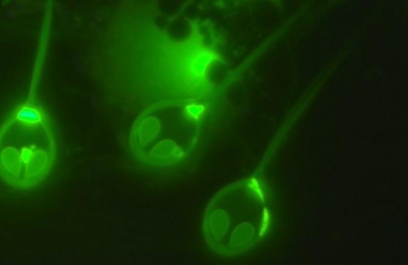 Открыто первое многоклеточное, которому не нужен кислород: загадка природы