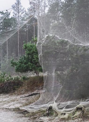 Время действия сети: зачем нужна гигантская ловушка для птиц на Куршской косе
