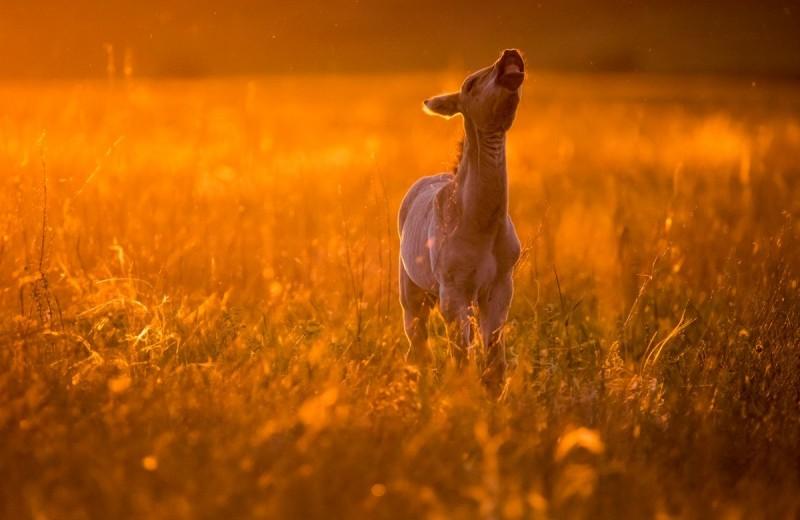«Лошадь Пржевальского: последняя дикая лошадь на Земле»: уникальная фотовыставка в Дарвиновском музее