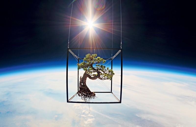 Снимки растений в открытом космосе: безумное творчество Азумы Макото