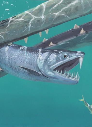 Странные саблезубые анчоусы бороздили моря после вымирания динозавров