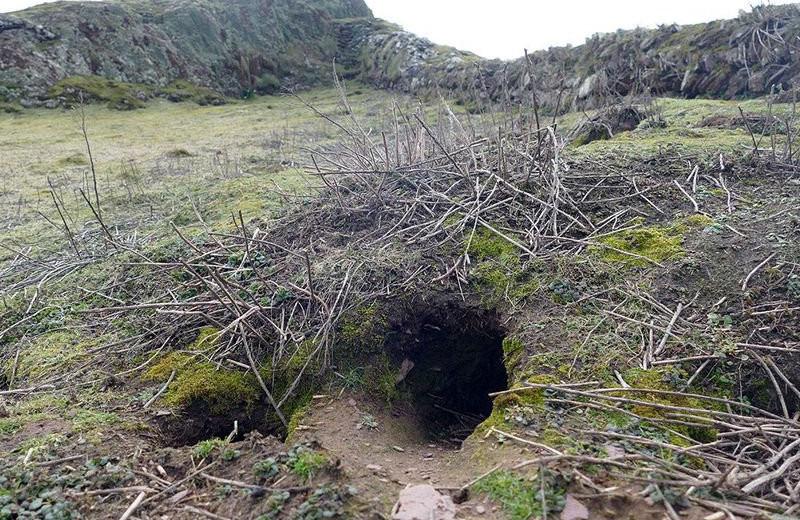 Кролики раскопали артефакты бронзового и каменного веков
