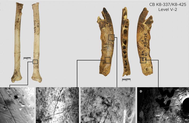 В Марокко нашли древнейшее свидетельство изготовления одежды