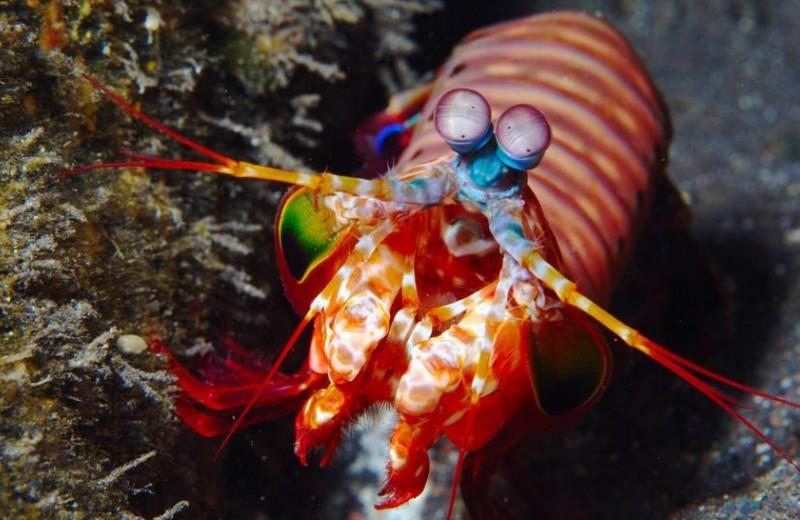 Безумный клоун против слизи-гипнотизера: морские супергерои