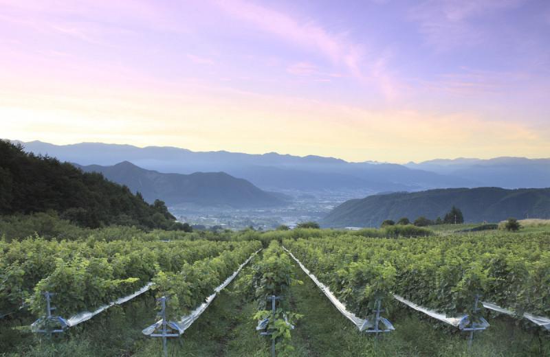 То в жар, то в холод: 5 необычных мест, где делают вино