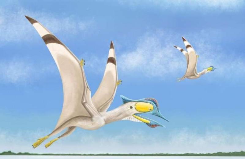 Останки беззубого птерозавра обнаружили в Африке