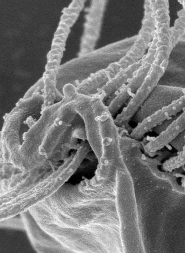 Студентка случайно открыла новую супергруппу эукариот