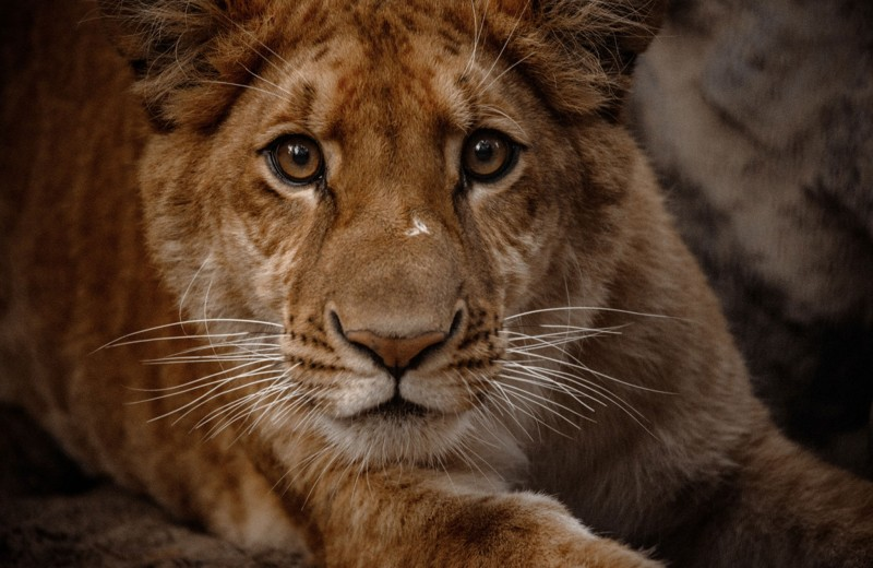Численность диких животных сократилась почти на 60% и другие выводы из доклада WWF