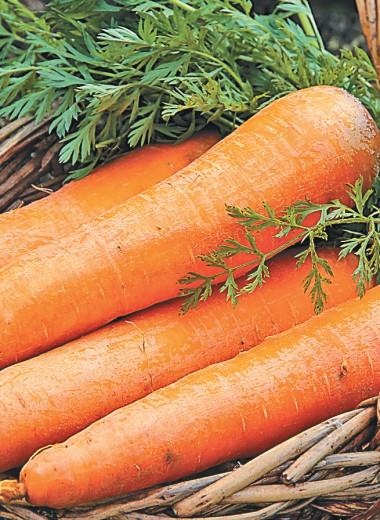 Своя морковка круглый год