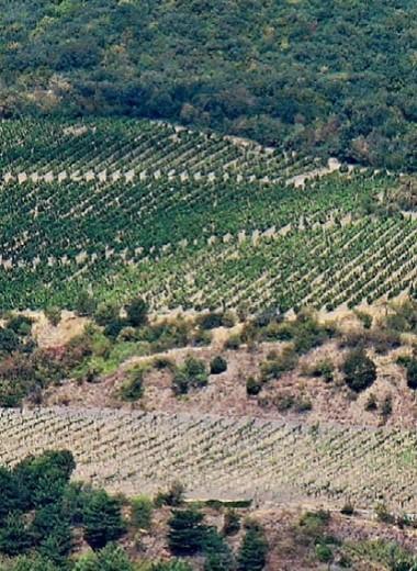 Энергия из виноградников