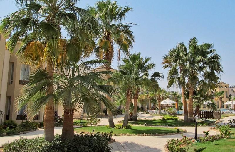 Зелёный Египет