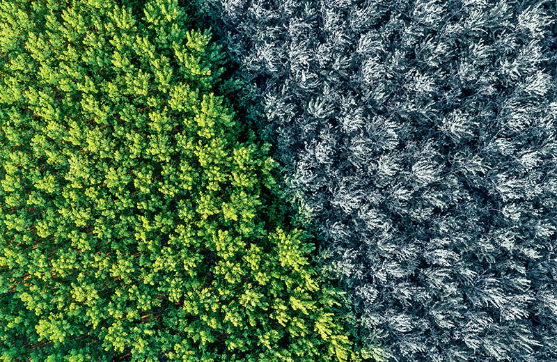 5 невероятных проектов для борьбы с потеплением
