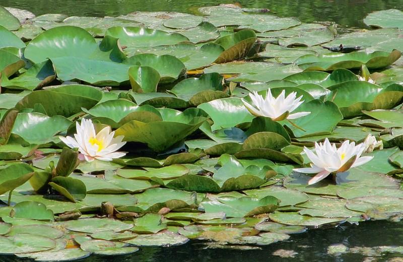 «Зелёные русалки» наших вод