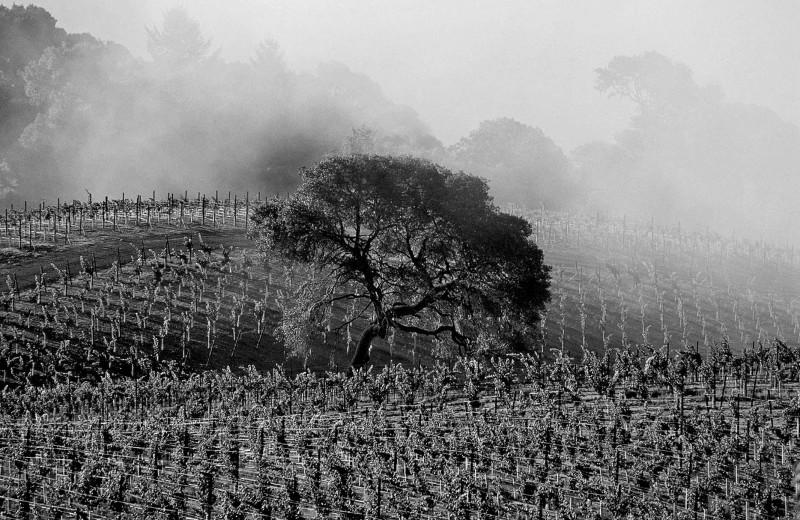 Wine Spectator в поисках новой обочины
