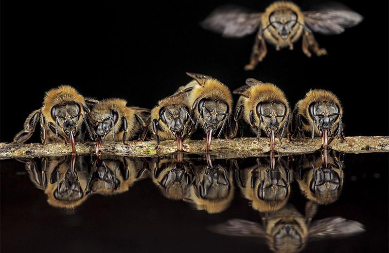 Тайны диких пчел