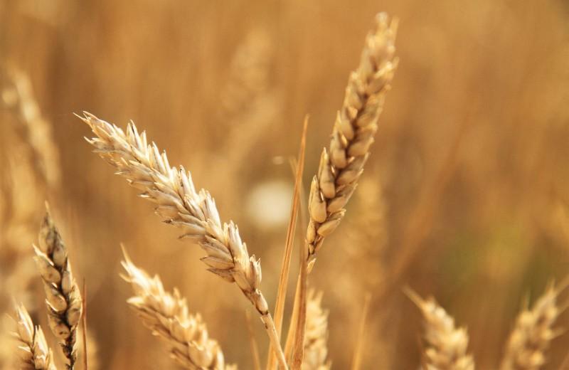 Весеннее равновесие в аюрведе: продукты и специи, которые следует добавить в рацион
