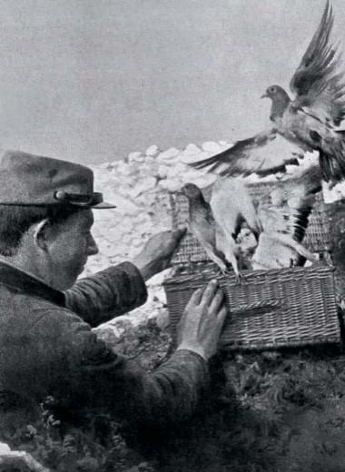 Новая миссия голубей