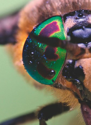 Пять опасных насекомых