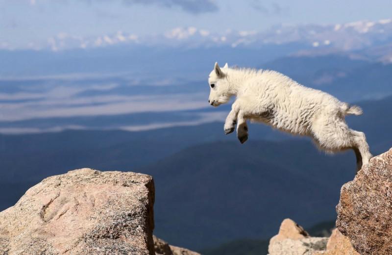 Затяжной прыжок