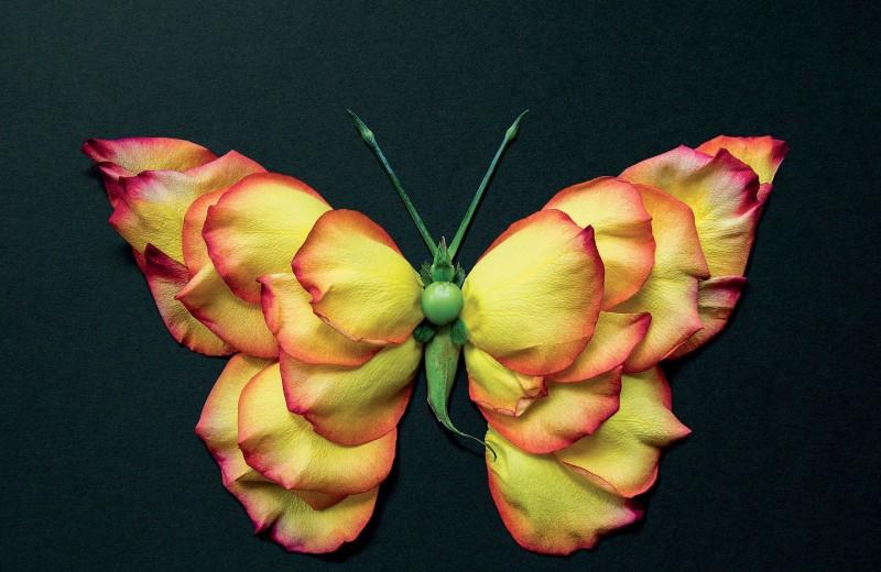 Фотожурнал: жуки из цветов