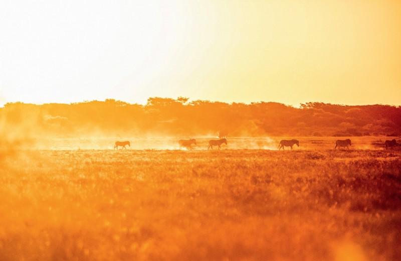 Кругосветное путешествие Алексея Камерзанова. Ботсвана