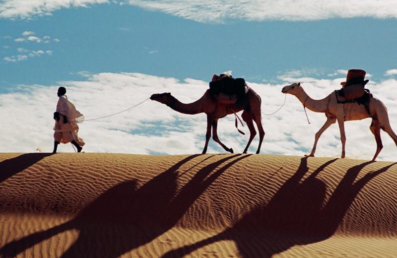 В Африку с любовью