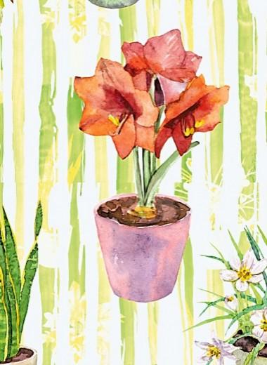 7 натуральных удобрений для комнатных цветов
