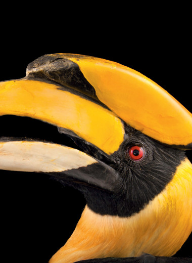 Эти важные птицы