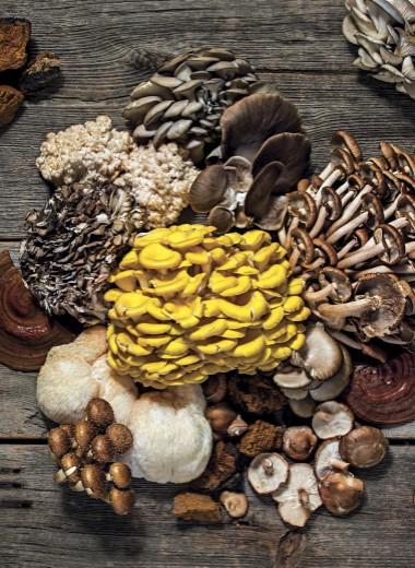 Популярность грибов: растет, как на дрожжах