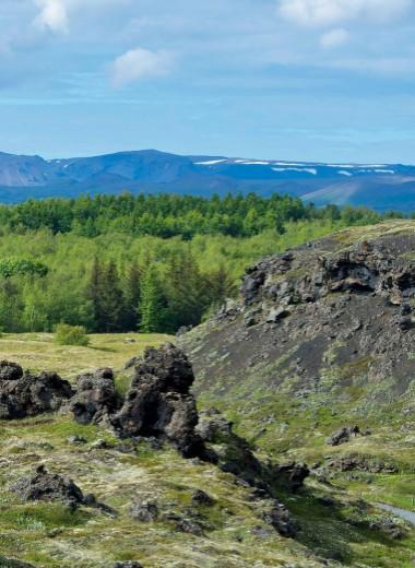Исландия – страна берез