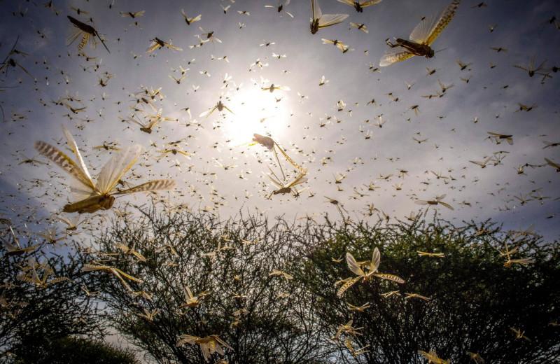 Насекомые, наша еда и шестое массовое вымирание: какая между всем этим связь?