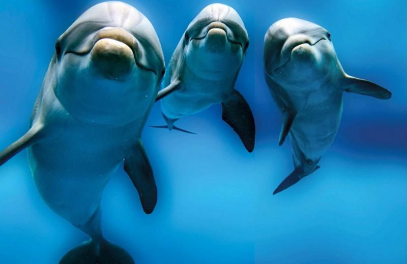 Ловеласы морей