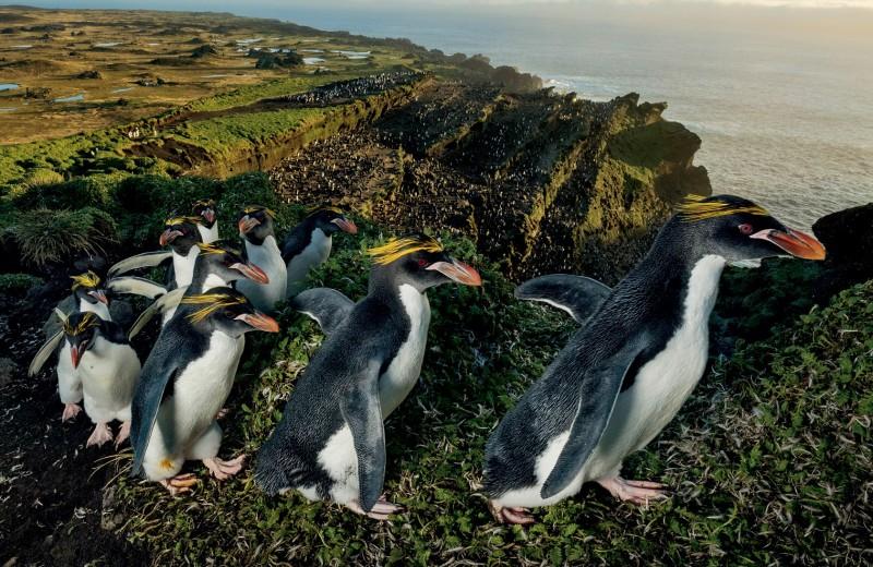 Остров Марион. ЮАР