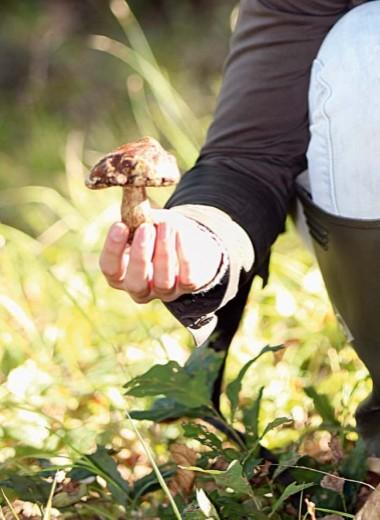 Идемпо грибы