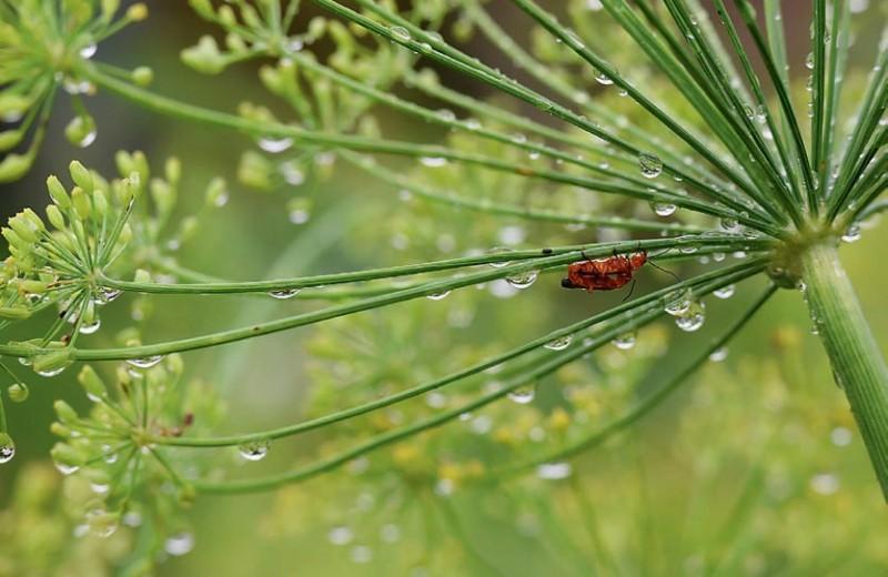 Сидящие под дождём