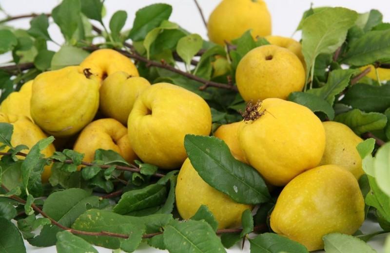 Декоративный кустарник с витаминными плодами