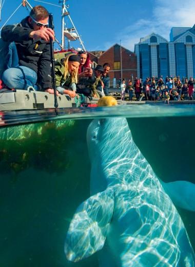 Сказка о потерянном ките