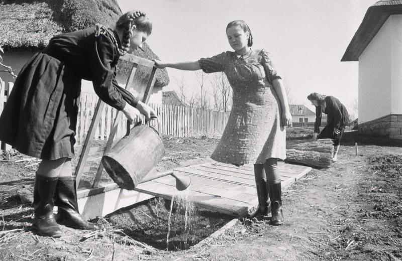 Дружно работают школьницы Оля Минзюк и Вера Кольцюк