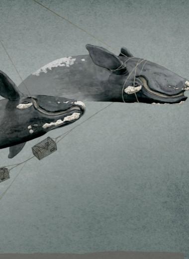 Распутать китов