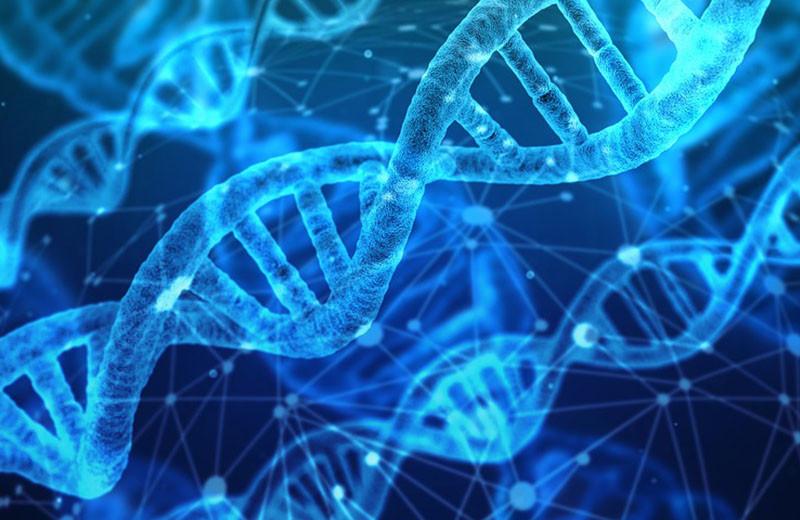 Систему предсказания цвета глаз и волос по ДНК уточнили