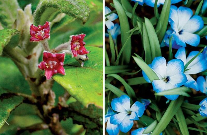 Растения, которые мы не сохранили