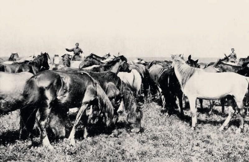 Великое переселение лошадей