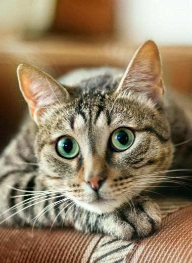 Ненавижу котиков...