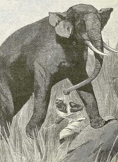 Охотничьи байки
