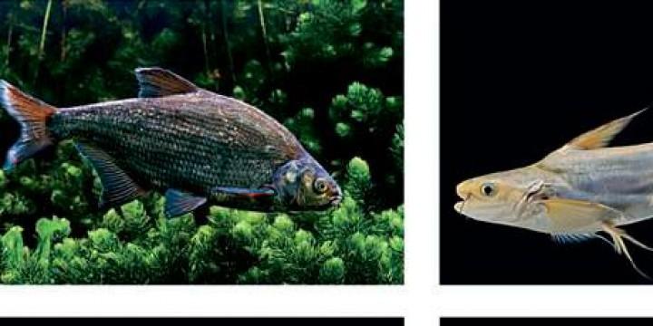 Рыбный день отменяется