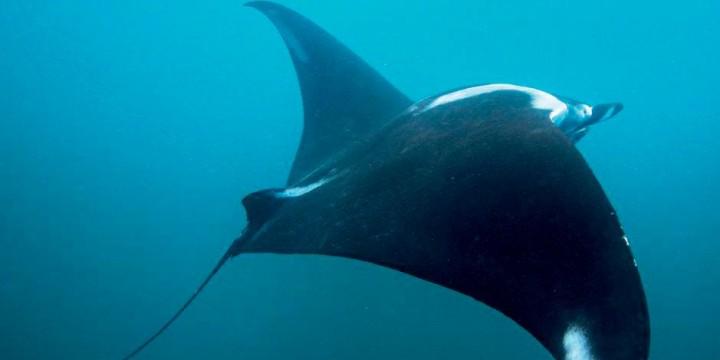 Спасаем обитателей океана
