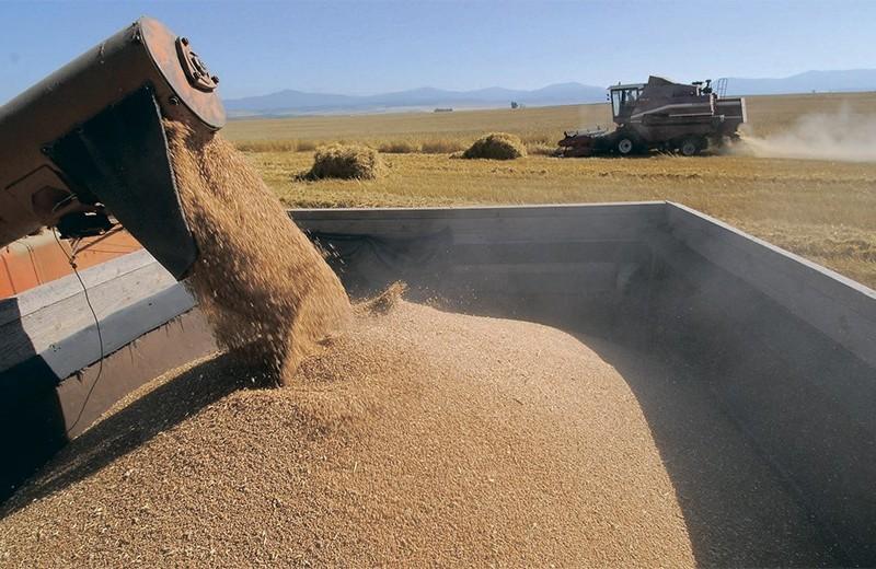 Зерно — по адресным квотам