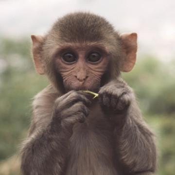 Дарвиновка на эволюции
